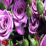 Фикшен сиреневая роза, фото 3