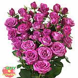 Фикшен сиреневая роза, фото 7