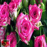 Хейли роза спрей, фото 5