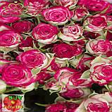 Хейли роза спрей, фото 4