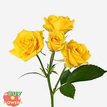 Шанни роза желтая ветка