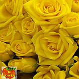 Шанни роза желтая ветка, фото 3