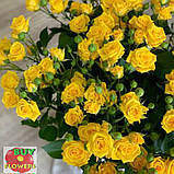 Шанни роза желтая ветка, фото 6