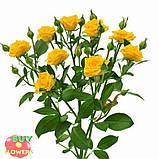 Шанни роза желтая ветка, фото 9