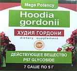 Hoodia Gordonii - Порошок для похудения (Худия Гордони), фото 2