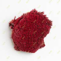 Стабілізований мох Green Ecco Moss купина червона 0,5 кг.