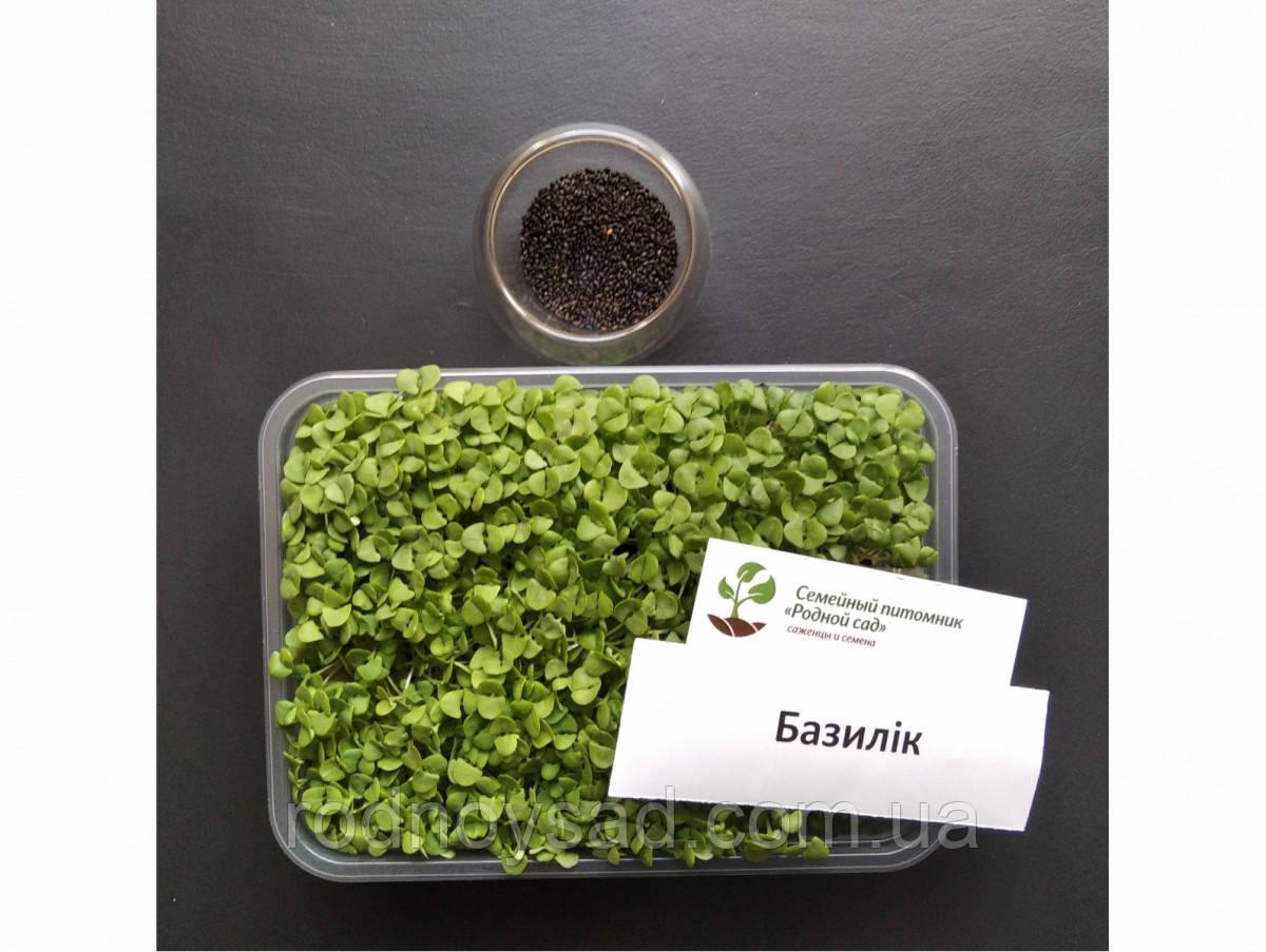 Базилік фіолетовий насіння для мікрозелені (5 грам)