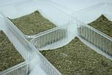 Набір для вирощування мікрозелені (13 врожаїв), фото 3