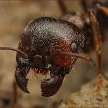 Препараты от муравьёв, мух, медведки, слизней, кротов и мышей