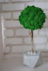 Большое стабилизированное дерево в бетонной вазе 1 м /декор для дома и офиса /Дерево в бетоне /Дерево из мха