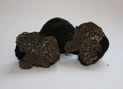 Мицелий гриб трюфель .