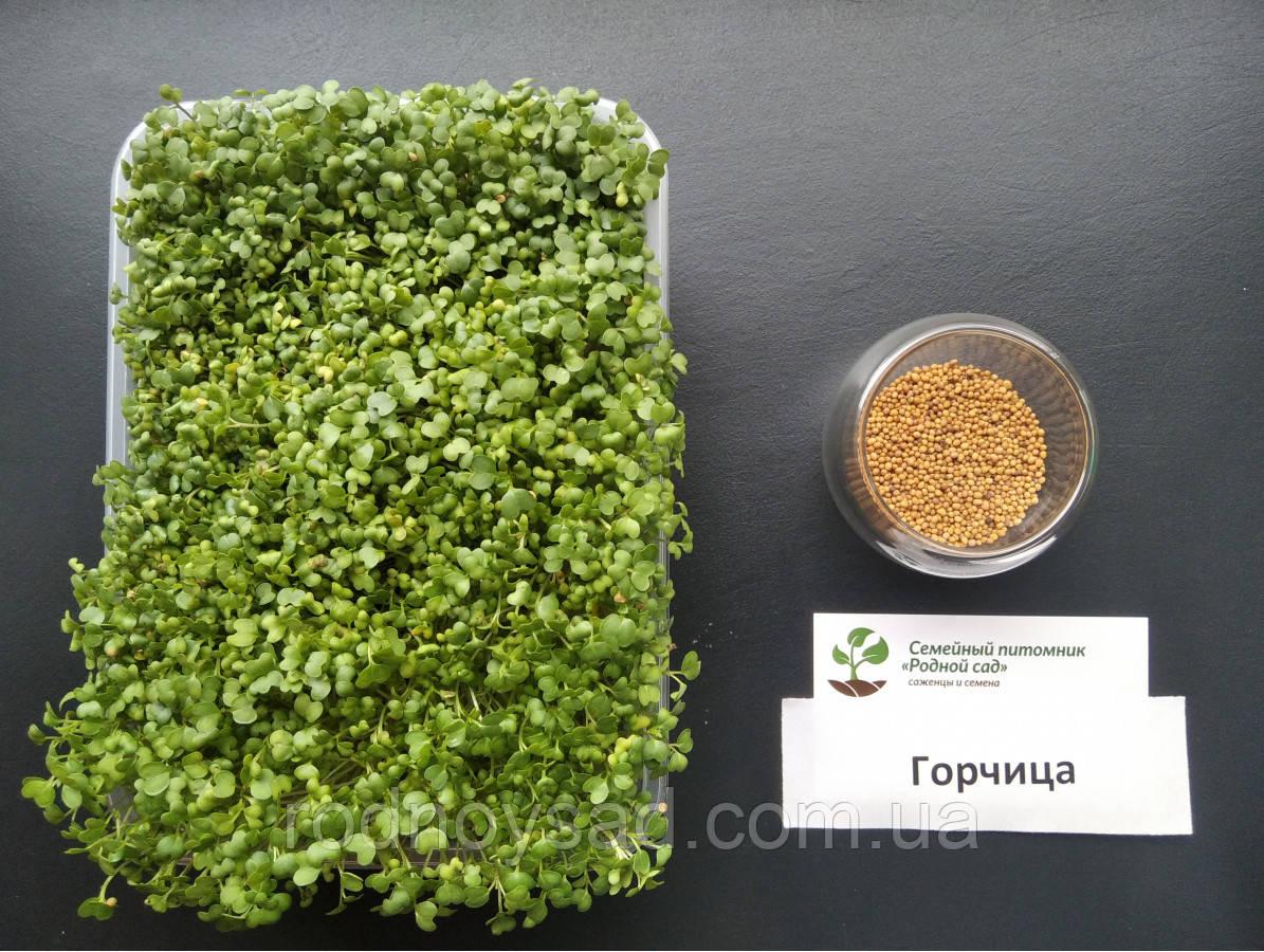 Гірчиця насіння для мікрозелені (8 грам)