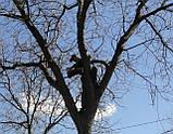 Кронирование спиливание деревьев, обрезка веток сада, фото 3