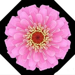 Ветрозащитный зонт Up-Brella | антизонт | зонт обратного сложения | зонт наоборот Цветок светло-розовый
