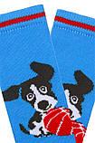 Набір 3 шт. Шкарпетки для немовлят демісезонні Bross з бавовни, фото 3