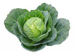 Полив капусты - как правильно поливать и выращивать