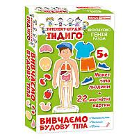 Детская развивающая игра на магнитах. Изучаем строение тела 13109081, 22 карточки в наборе