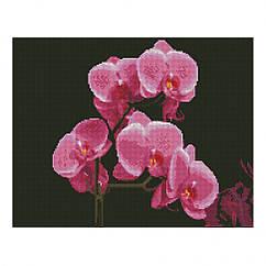"Алмазная мозаика. Strateg FA11877 ""Розовые орхидеи"" 40х50 см"