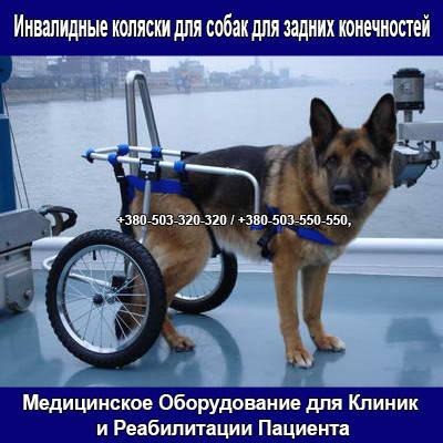 Інвалідні коляски для собак для задніх кінцівок