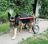 Инвалидная коляска для собак, фото 2