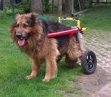 Инвалидная коляска для собак, фото 3