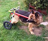 Инвалидная коляска для собак, фото 4