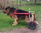 Инвалидная коляска для собак, фото 5