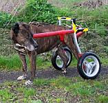 Инвалидная коляска для собак, фото 6