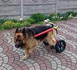 Инвалидная коляска для собак, фото 7