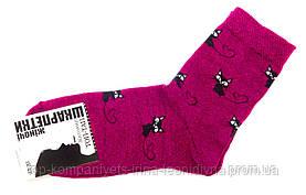 Шкарпетки жіночі ТОП-ТАП Котики класичні малиновий 23-25р 37-40 (Ж-112)