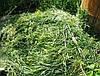 Используем скошенную траву