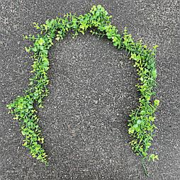 Искусственная Лиана эвкалипта зеленого пластик  175 см
