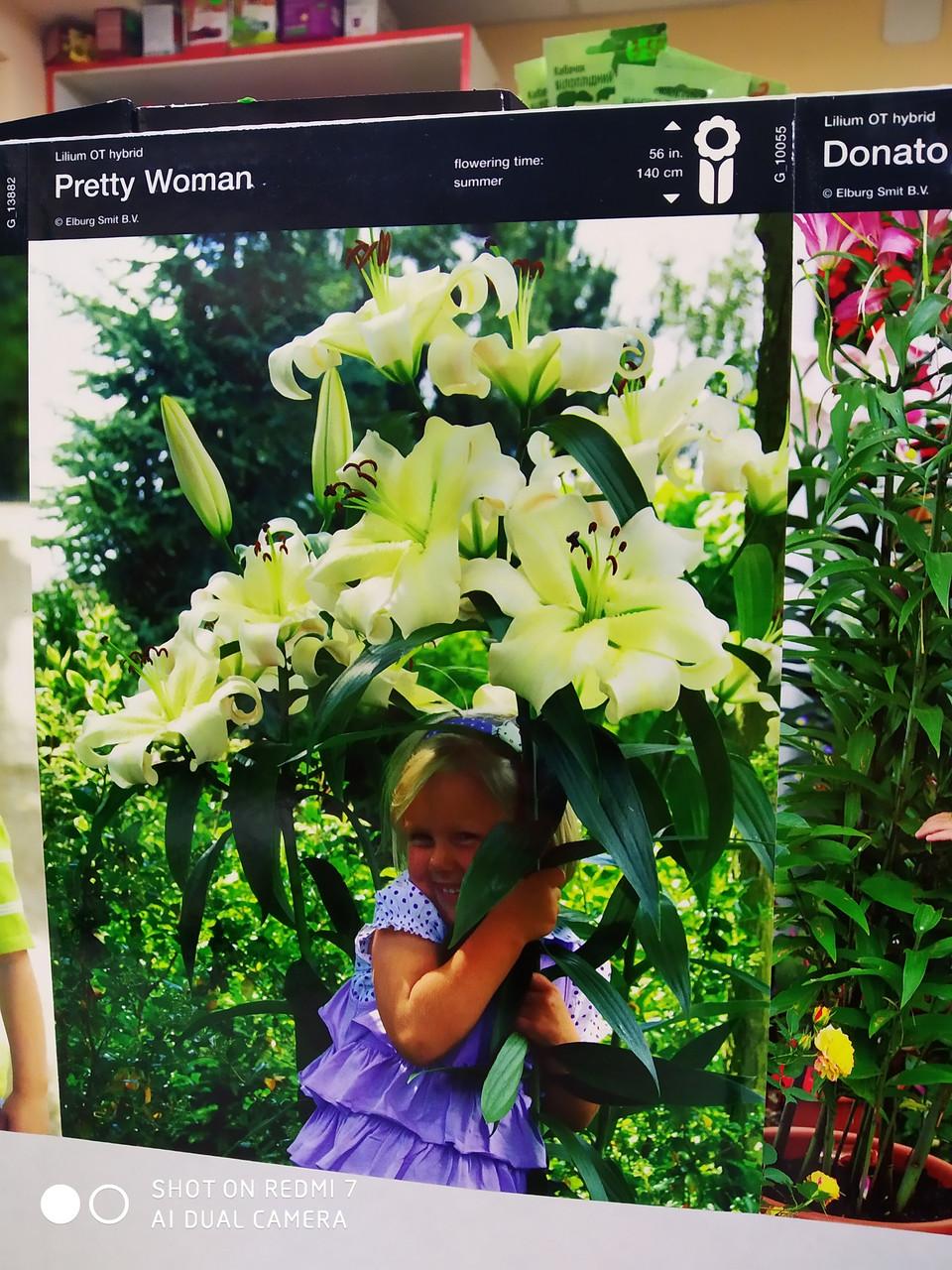 Луковица лилии ОТ-гибрид белая Pretty Woman 1 шт Junior Голландия
