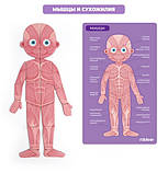 Магнитный пазл «Тело человека», 90 частей (MD2031), фото 3