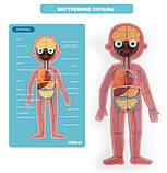 Магнитный пазл «Тело человека», 90 частей (MD2031), фото 4