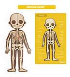 Магнитный пазл «Тело человека», 90 частей (MD2031), фото 5