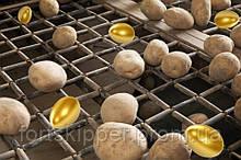 Бо сортувальник картоплі 10 т/год Landco