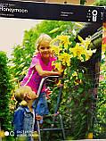 Цибулина лілії ОТ-гібрид жовто-червона Lavon 1 шт Junior Голландія, фото 3