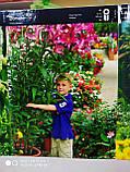 Цибулина лілії ОТ-гібрид жовто-червона Lavon 1 шт Junior Голландія, фото 4