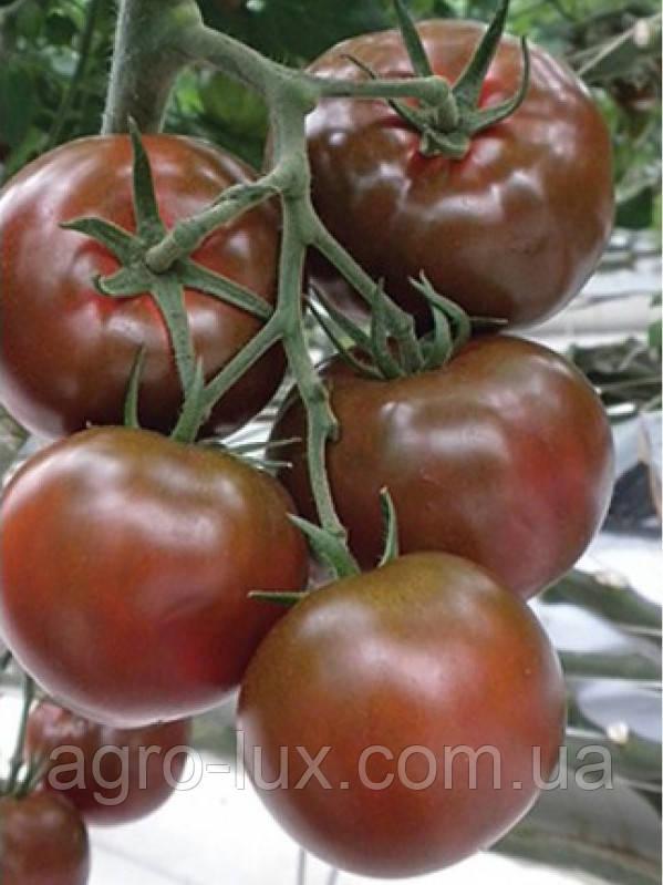 Семена черного томата Сашер F1 500 шт