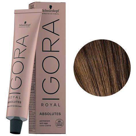 Краска для волос 6-50 Schwarzkopf Igora Royal Absolutes Темно-русый золотистый натуральный 60 мл, фото 2