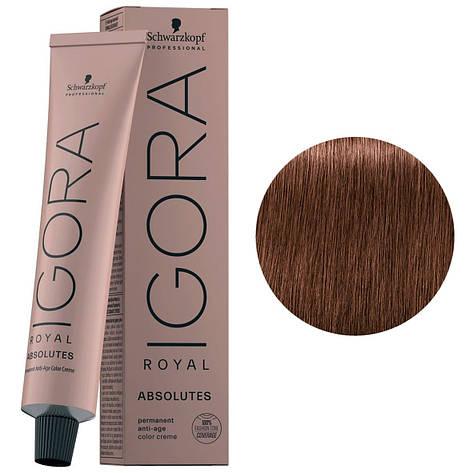 Краска для волос 6-580 Schwarzkopf Igora Royal Absolutes Темно-русый золотисто-красный 60 мл, фото 2