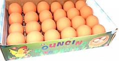 Попрыгунчик Яйца в лотке 862112 (24шт)