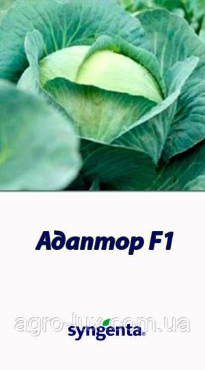 Семена капусты Адаптор F1 2500 шт СИНГЕНТА / Syngenta