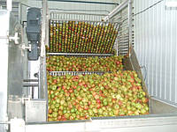 Аромат яблочный натуральный