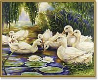Картина по номерам Schipper Утки в пруду (SC9130449) 40 х 50 см