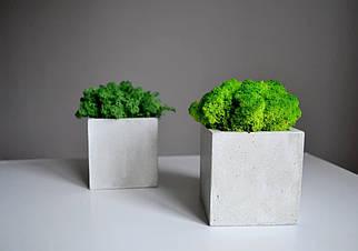 Бетонну кашпо 8*8 см/ Бетонний горщик для рослин /Кашпо для стабілізованого моху