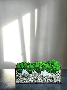 Скляний флораріум з мохом 10x30x9 /Декор для дому та офісу / Декор з живих рослин
