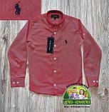 Стильная рубашка Polo для мальчика 5-6 лет, фото 4
