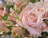 Троянда - спрей Лідія (Lidia), фото 1